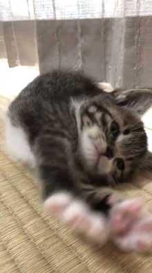 握手会 神対応 子猫 甘噛み