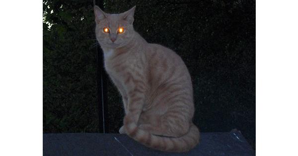 暗いところで猫の写真を撮ると、目が光る理由