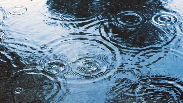 科学的にここまで解明されている「雨の匂い」の正体