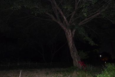 心霊 写真 タクシー 三和交通 木 鳥居