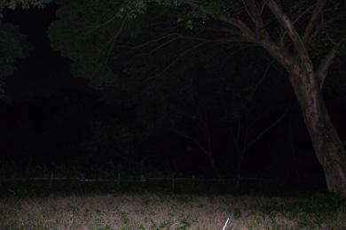心霊 写真 タクシー 三和交通 木 鳥居 オーブ 顔