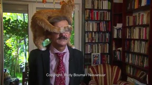 「涙を流して笑った」「猫にしか目がいかない」 真面目なインタビューに乱入した自由すぎる猫ちゃん