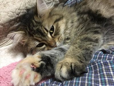 毛づくろいをする猫ちゃん