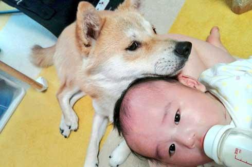 赤ちゃん おもちゃが欲しい 犬 我慢