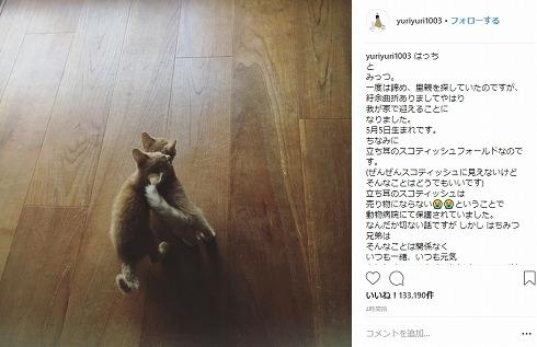 石田ゆり子 はっち みっつ ペット 猫 ハニオ タビ