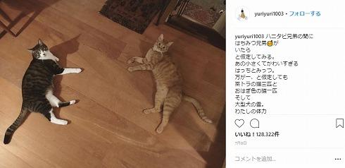 石田ゆり子 はっち みっつ ペット 猫 ハニオ タビ 里親