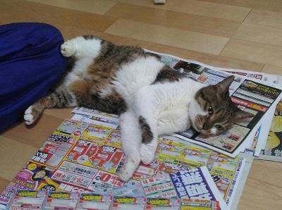 猫 かまってちゃん 新聞 邪魔 好き