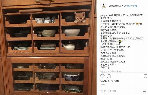 石田ゆり子 はっち みっつ はちみつ兄弟 猫 Instagram 子猫