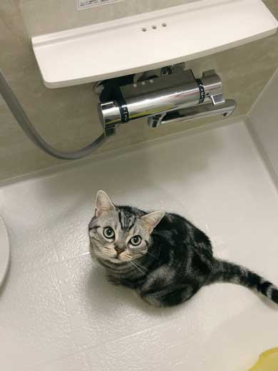シャワー 水 飲む 下手 猫 スロー