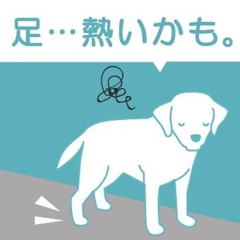 docdogワンタッチキャンペーン
