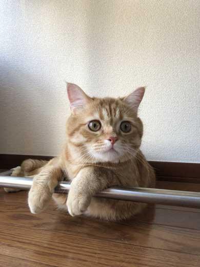 宇宙 猫 テレビ 合成 スペースキャット