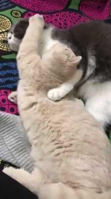 締め出されてしまった 猫 表情 怖い みかんとじろうさん