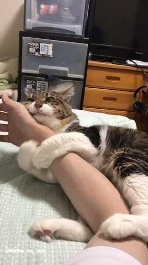 猫 ヤマダ 目覚め ビックリ 朝 ハグ 腕