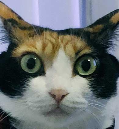 猫 雷 びっくり 顔