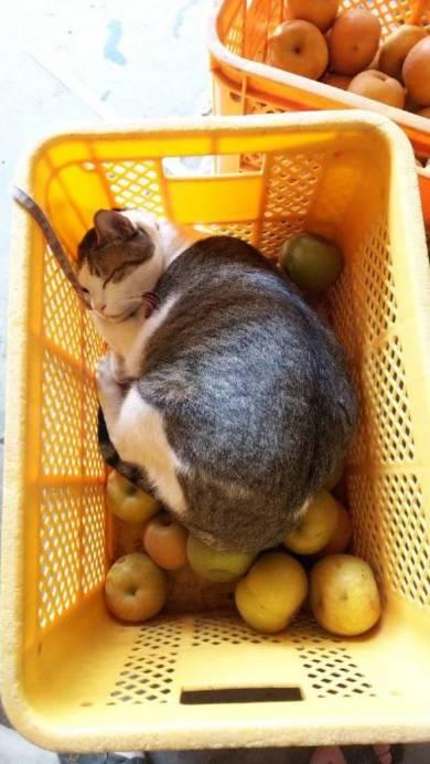 涼しそうな猫