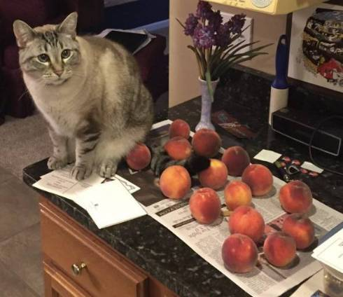 桃が好きな猫 Ozzy