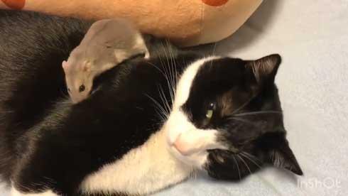 猫 ハムスター 仲良し もぐ まる