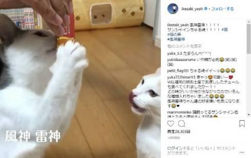 ロッチ 中岡 サンシャイン池崎 猫 風神 雷神 平野ノラ CIAOちゅ〜る