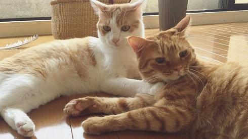 フルーツキャップ 猫