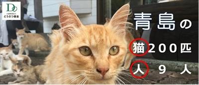 青島猫不妊手術