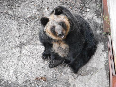 定山渓熊牧場 クマ 放置 うわさ 取材 2018年