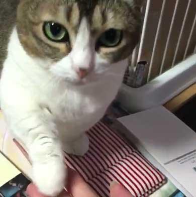 お手 おかわり 覚えた 猫 意思疎通