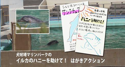 イルカ 犬吠埼マリンパーク