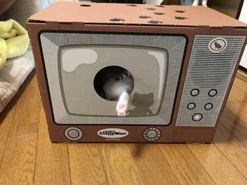 リアル 貞子 猫 テレビ 出てくる