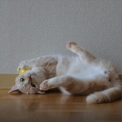 キャッチボールをするネコちゃん