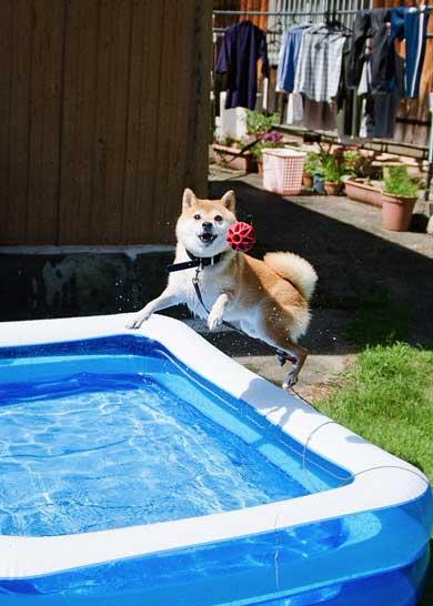 積んだ ジャンプ 顎乗せる 犬 inubot