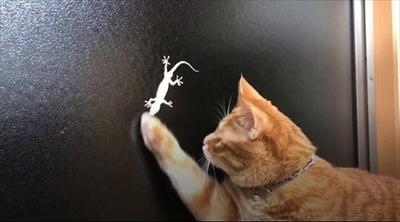 ヤモリと猫