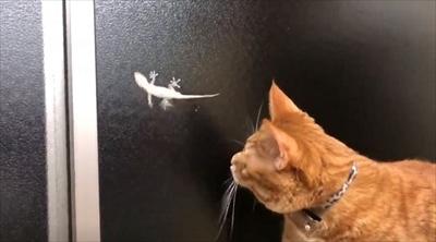 ヤモリを追いかける猫さん