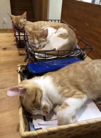 宿題監視するネコ