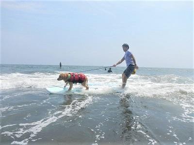 こー君 ドッグサーフィン