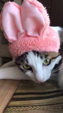 仏壇 水 減ってる 怪現象 原因 猫