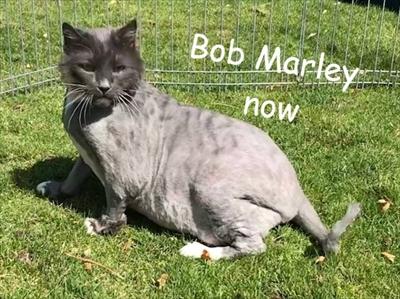 保護猫ボブマーリー