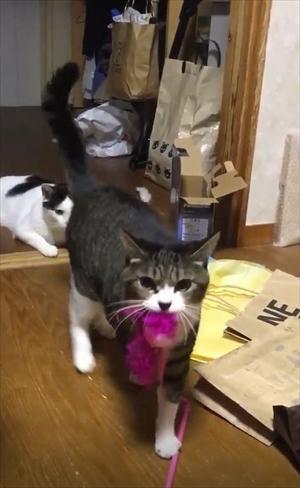 鈴を鳴らす猫ちゃん