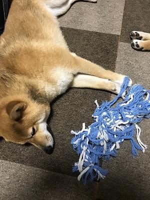 犬 アニメ オープニング 2匹