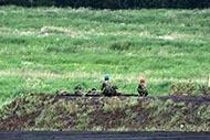 平成30年度富士総合火力演習