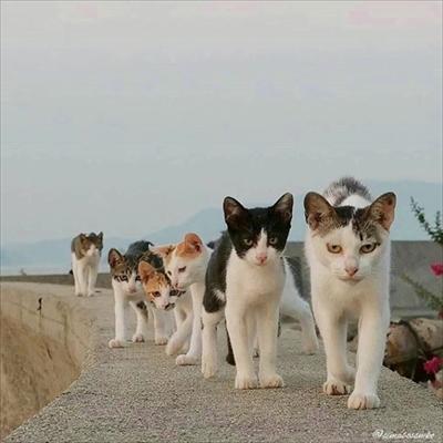 島猫写真展
