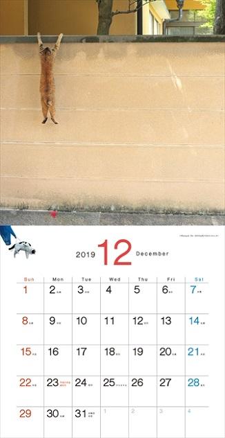 必死すぎるネコカレンダー