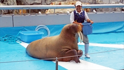 旅好きが選ぶ日本の動物園・水族館ランキング