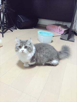 腕をハムハムする猫ちゃん
