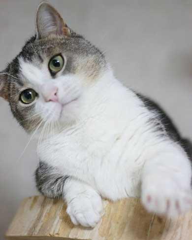 猫 かまってほしい ラブラブ かむ