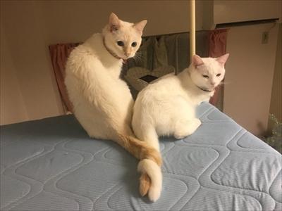 トルネード尻尾の猫ちゃんたち