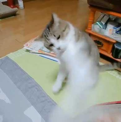 猫 歯ブラシ なでなで 落ち着く 落ち着かない 攻撃