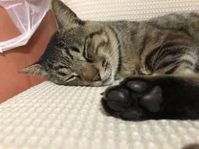 眠すぎる猫