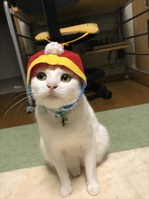 着地がかっこいい猫さん
