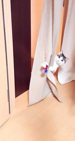 新しいごみ袋 飛び込んでくる 猫 満足げ ドヤ顔