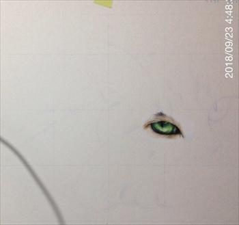 色鉛筆で描いたネコさん